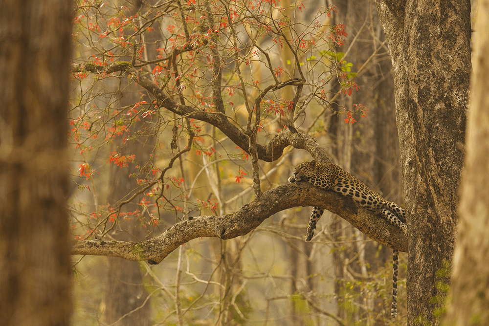 Lazy rosettes from Kabini